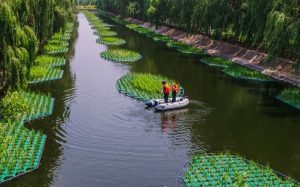 Isla Flotante Ecológica