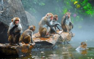 Isla de Monos Nanwan en Hainan China